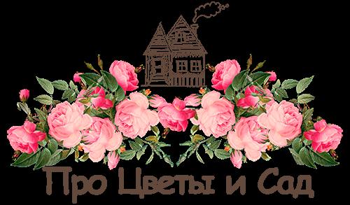 Про цветы и сад