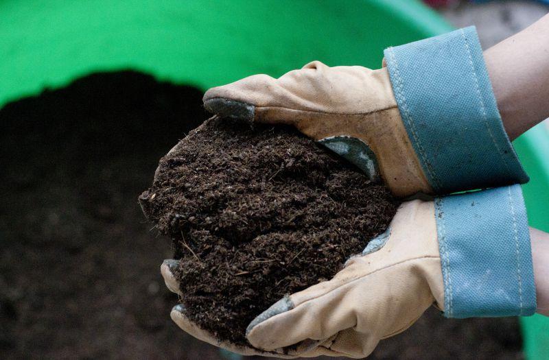 Когда можно сажать огурцы в открытый грунт семенами и рассадой