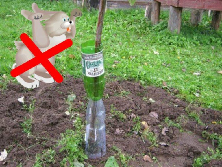 как спасти деревья от грызунов зимой