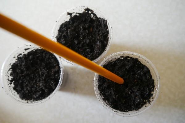 Торения 44 фото выращивание цветов из семян и черенков в домашних условиях Описание посадки и ухода в открытом грунте