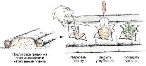Волокно для клубники