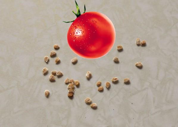 создается лучших семена помидора картинки лучшее здравоохранение среди