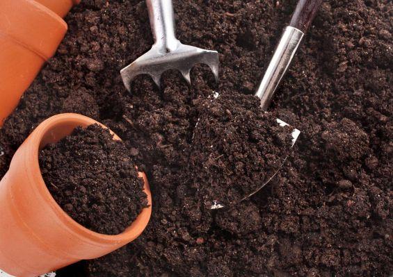 Как вырастить эхинацею из семян в домашних условиях видео