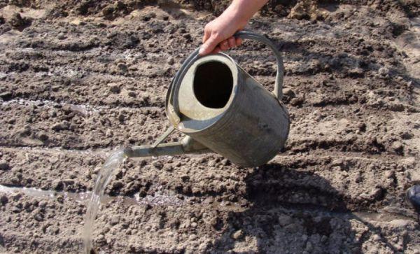 Сроки осенней посадки клубники на урале в открытом грунте