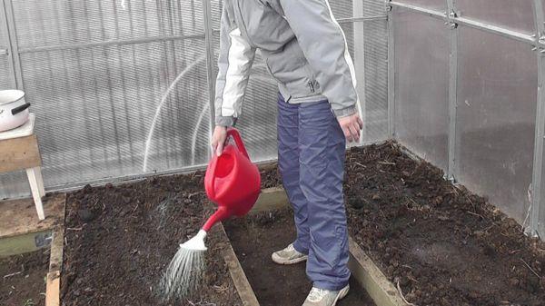 Подготовка теплицы из поликарбоната весной к новому сезону