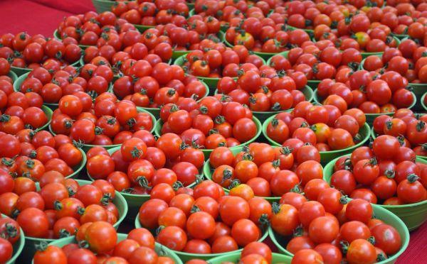 Как правильно оборвать пасынки у помидор