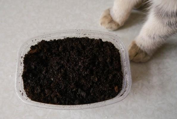 Как выращивать флоксы из семян в домашних условиях?