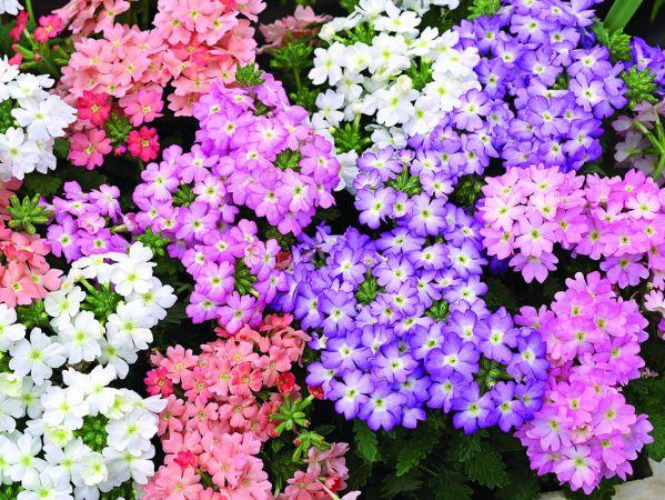 Рассада цветов в начале марта: что посадить из однолетников и многолетников