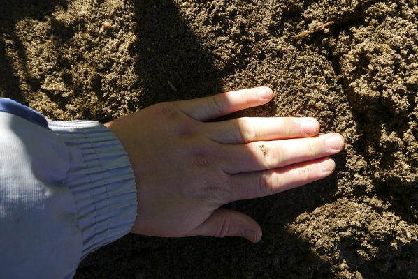Аубреция выращивание из семян когда сажать
